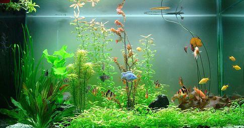 Kết quả hình ảnh cho Cách chọn loại cá và bể nuôi cá cảnh cho người mới