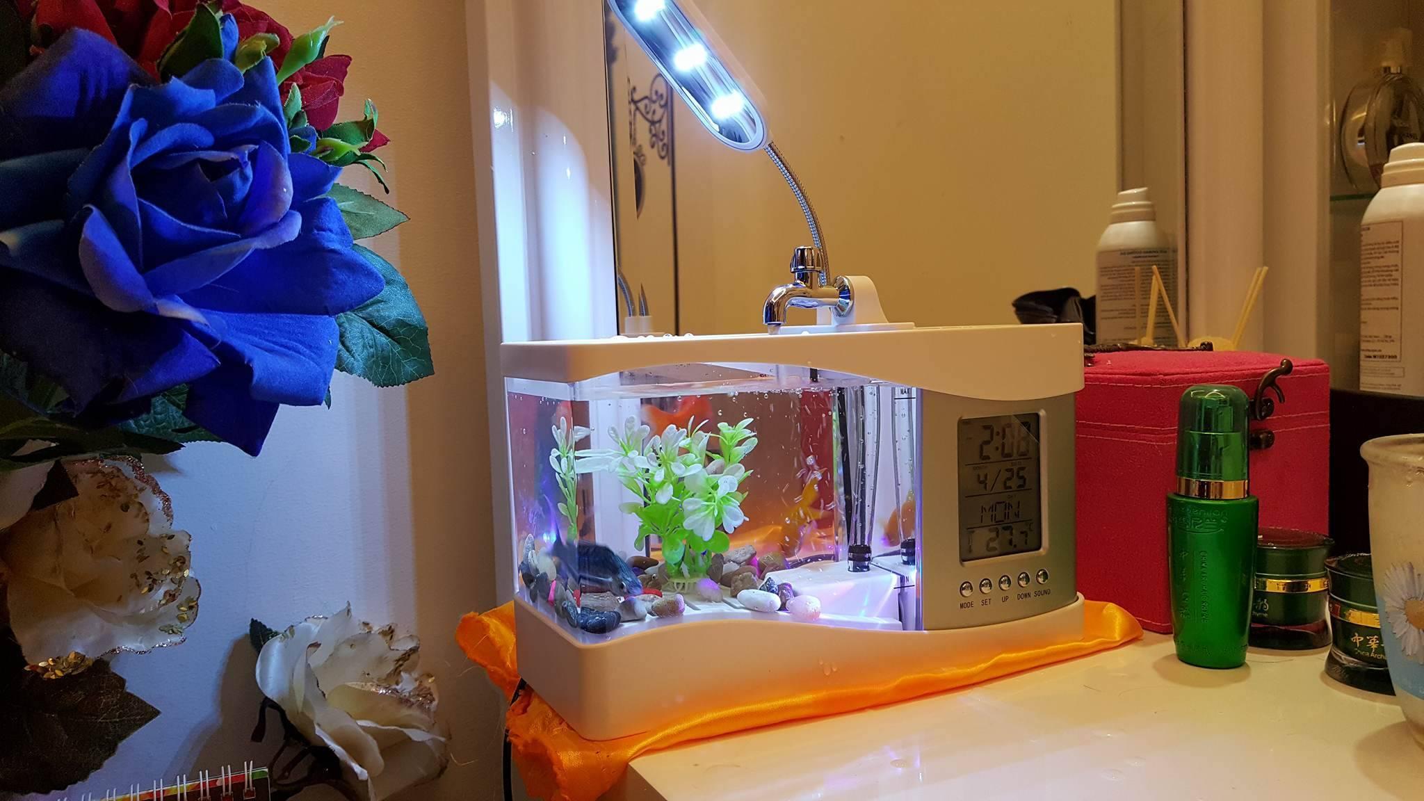 bể cá mini cho không gian căn phòng sang trọng