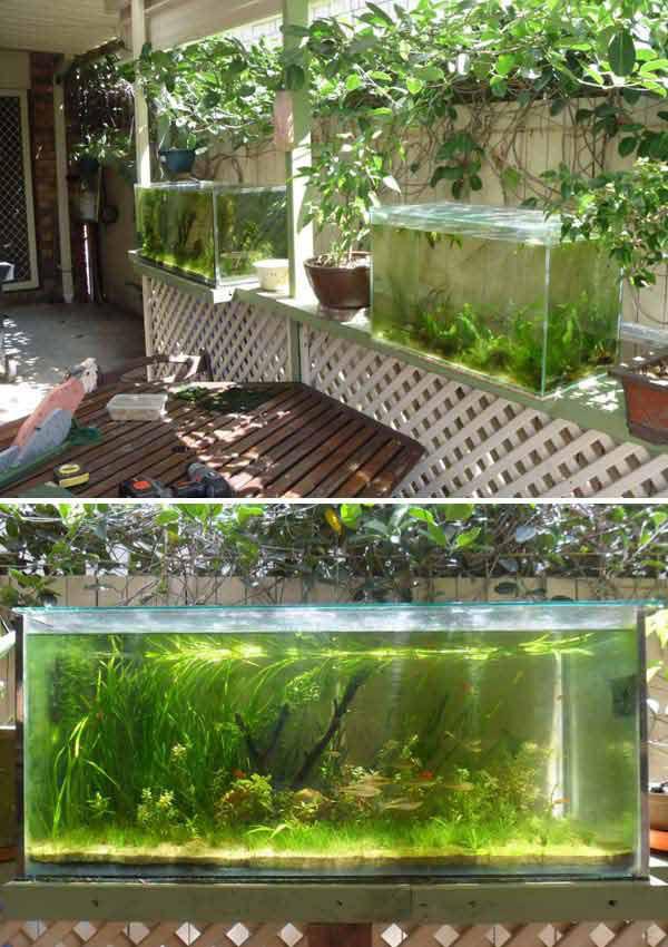 bể cá mini để đúng chỗ