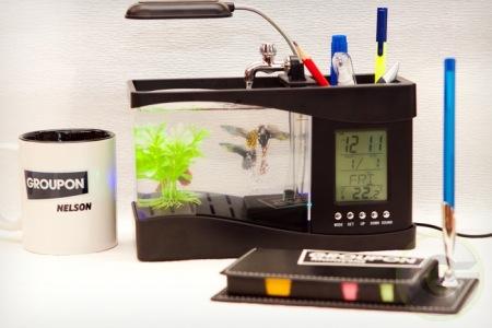 bể cá mini văn phòng