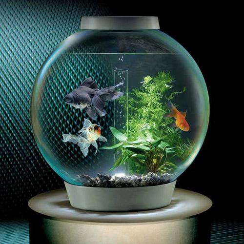 bể cá mini hình tròn