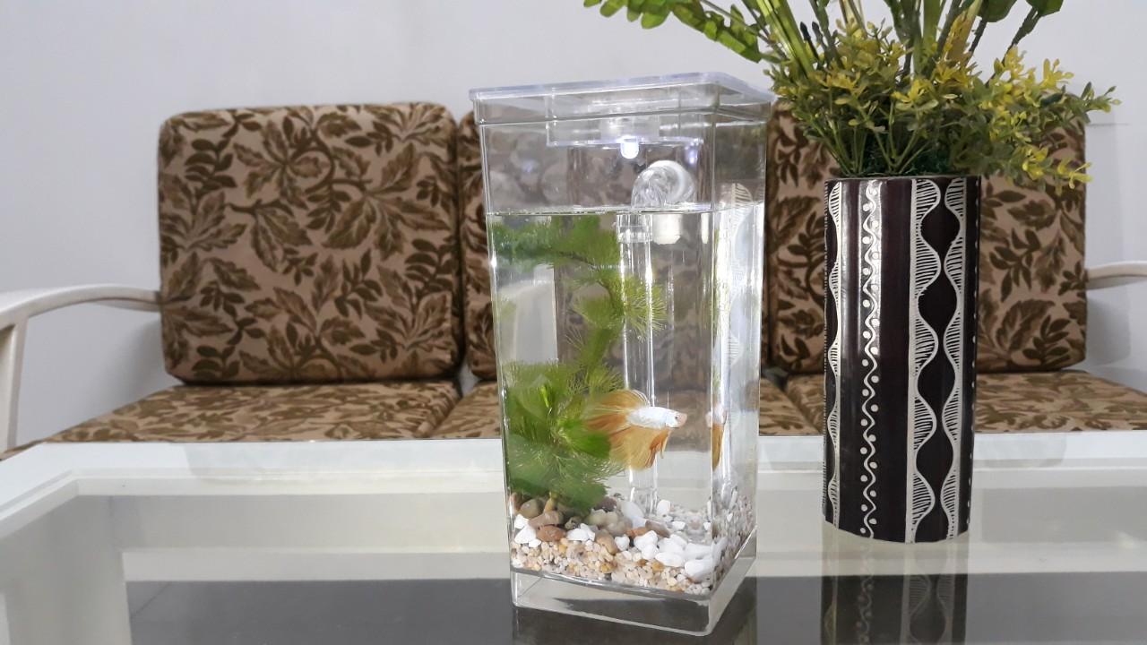 Bể cá mini my funfish