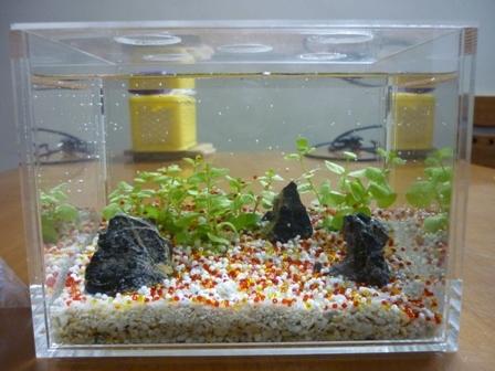 setup bể cá mini