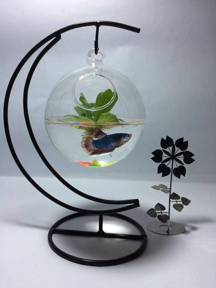 bể cá mini treo cung trăng