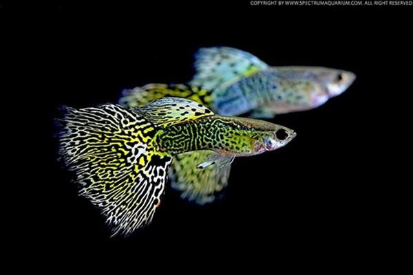 nuôi cá nhỏ trong bể cá mini